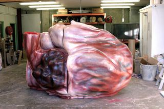 The first blue whales heart.