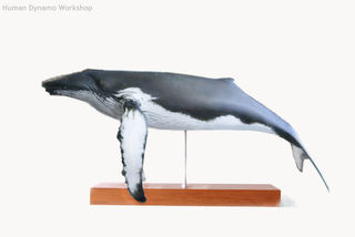Whale Models