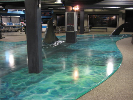 Megalodon Floor Exhibit - Exhibition, Display, Themed Attractions