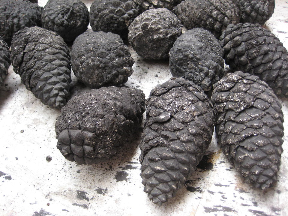 Fireproof cement pinecones